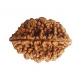 2 MUKHI RUDRAKSHA-Helps in Singles Getting Married.