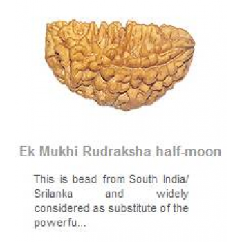 Ek Mukhi Rudraksha-is considered a Divine Bead. A person wearing this Rudraksha enjoys all the worldly pleasures yet he remains detached from them. This bead not only gives worldly pleasures but also strengthen the spiritual power to its wearer.